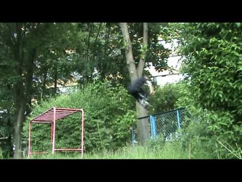 ravens parkour lublin